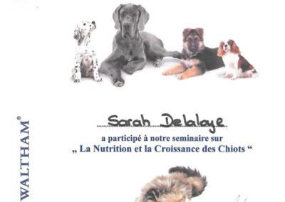 Certificat Séminaire La nutrition et la croissance des chiots
